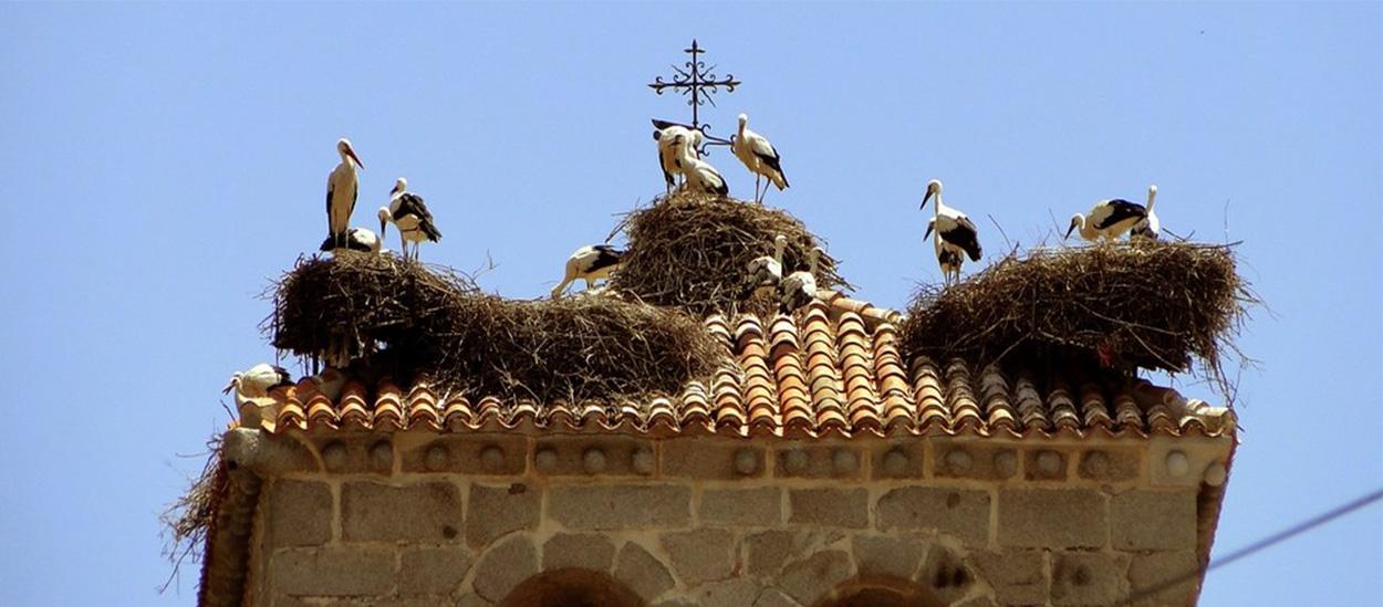 La relación de la arquitectura urbana y la biodiversidad: las aves