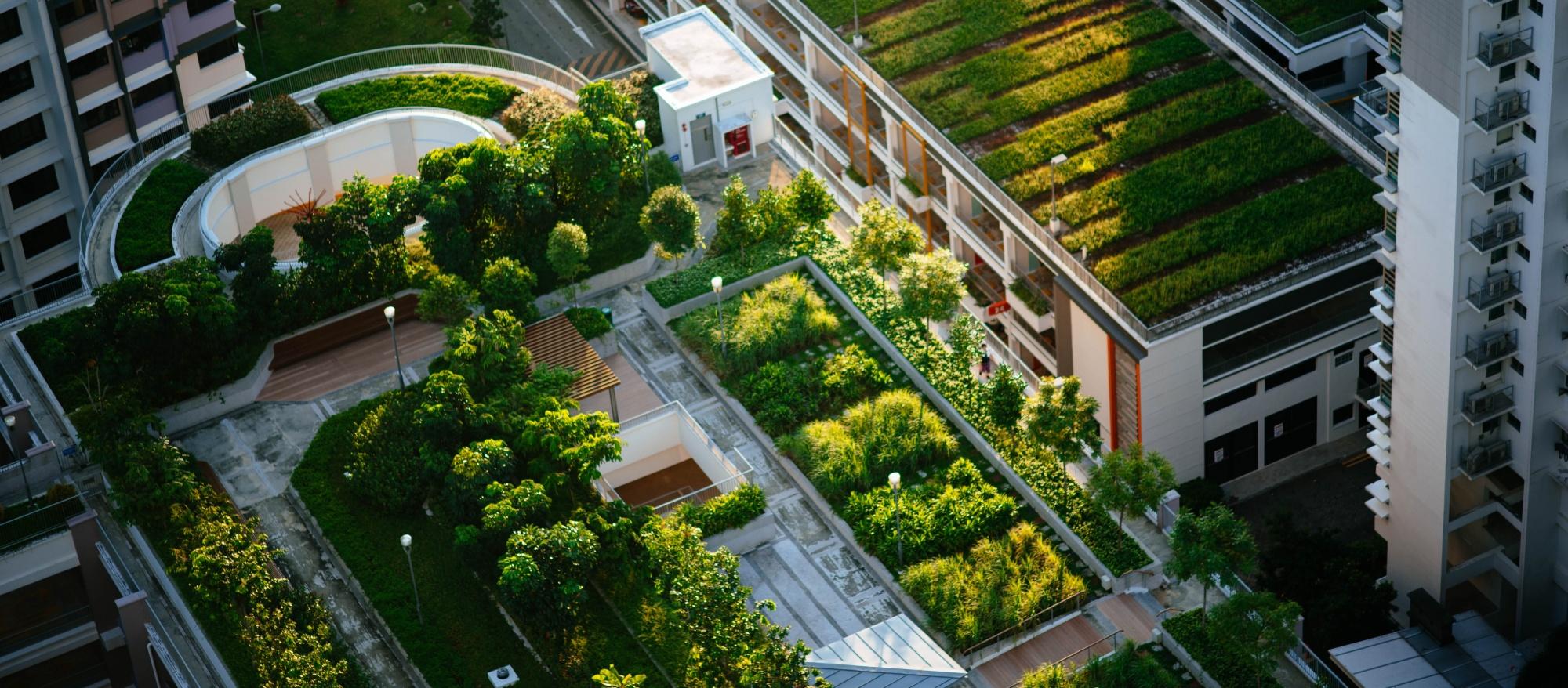 ¿Qué debes tener en cuenta al instalar una cubierta verde?